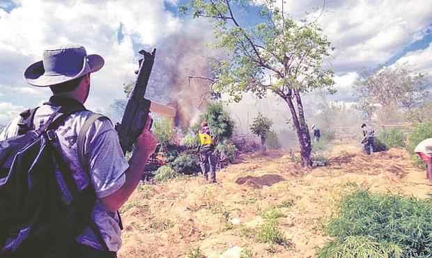 Cultivo da erva na região teve a maior ação de combate na Operação Mandacaru (TERESA MAIA/DP/D.A PRESS)