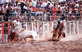 Prática evoluiu e vaqueiros que mutilam bois são eliminados das competições, mas ainda não é unanimidade (Ayron Santos/DP)
