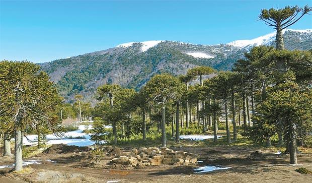 Cartão-postal: O Centro de Ski e Hotel Valle Corralco está localizado na base do vulcão Lonquimay dentro da reserva nacional Malalcahuello- Nalcas. (Edilson Segundo/Arquivo Pessoal)